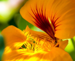 cropped-Jims-yellow-Flower-Closeup.jpg